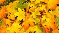 Как сделать вазу из кленовых листьев своими руками