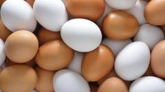 Можно ли собакам давать яйца