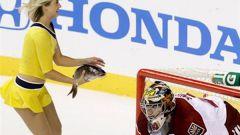 Почему в НХЛ бросают рыбу на лед