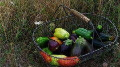Кабачки с баклажанами: пошаговые рецепты с фото для легкого приготовления