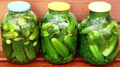 Засолка огурцов холодным способом: пошаговые рецепты с фото для легкого приготовления