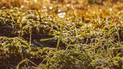 Как избавиться от сорняков без химии