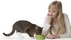 Как кормить кошку? Вечная дилемма владельцев