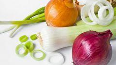 Репчатый лук - польза и вред для здоровья