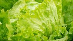 Салат айсберг: приготовление вкусных и полезных блюд