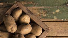 Чем вредна картошка для здоровья