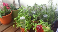 Как обеспечить комнатные растения влагой при длительном отсутствии