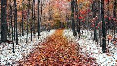 Что говорят осенние приметы о грядущей зиме