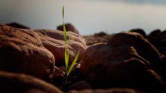 Как развить в себе качества успешной личности