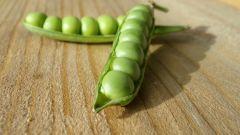 Зеленый горошек, консервированный на зиму: пошаговые рецепты с фото для легкого приготовления
