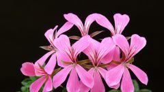 Домашние цветы и растения для кухни