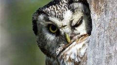 Как из совы превратиться в жаворонка