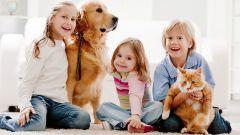 Кошки или собаки - их роль в семье