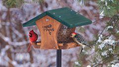 Чем лучше всего подкармливать птиц зимой