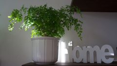 Топ-5 комнатных растений для чистого воздуха в квартире