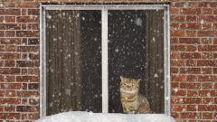 Как избавиться от зимней хандры: 11 действенных советов