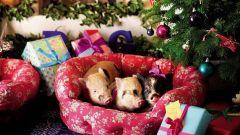 Что готовит год Желтой Земляной Свиньи для каждого из знаков Зодиака