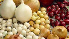 Надо ли покупать лук севок так рано зимой