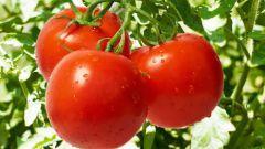 Какие сорта томатов самые вкусные и сладкие
