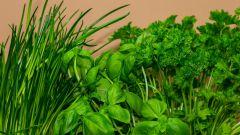 Как посадить зелень дома на подоконнике