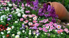 Какие цветы неприхотливы