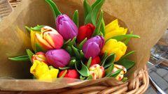 Как дольше сохранить букет тюльпанов в вазе
