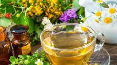 Какие травы помогут повысить иммунитет