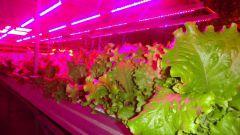 Какие преимущества у светодиодных ламп для растений