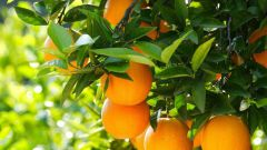 Чем полезен апельсин