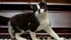 Какого рода слова «рояль» и «пианино» в русском языке