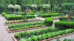 Что после чего можно сажать — севооборот на огороде