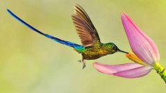 Какого рода слова «какаду» и «колибри» в русском языке