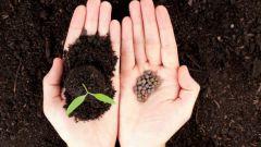 Как сажать семена на рассаду: важные моменты для хорошего урожая