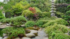 Ландшафтный дизайн. Сад в японском стиле