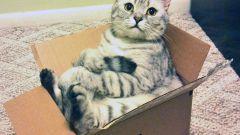 Почему кошки любят сидеть в коробках