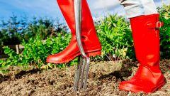Как подготовить землю огорода к посадкам весной