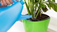 Как используют перекись водорода для комнатных растений
