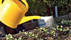 Как использовать перекись водорода для семян и рассады