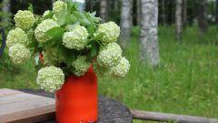 Какие растения способны привлечь в вашу жизнь удачу и счастье