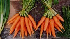 Как правильно сажать морковь, чтобы урожай был отменным