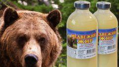 Как применять медвежий жир: лечебные свойства и противопоказания