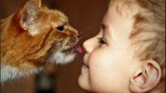 Что делать, если у ребенка аллергия на кошек
