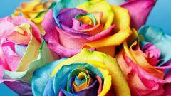 Как сделать розу радужной в домашних условиях за 24 часа