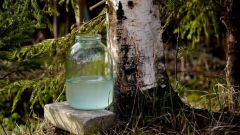 Какая польза березового сока для организма человека