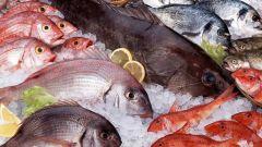 Как правильно выбирать свежую рыбу при покупке