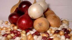 В чем замочить лук перед посадкой для хорошего урожая