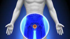 Предстательная железа: где находится, заболевания, симптомы
