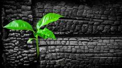 Уголь древесный: инструкция по применению, показания, цена