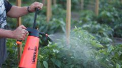 Чем опрыскать томаты в июне и июле