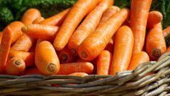 Сорта моркови: урожайность и особенности